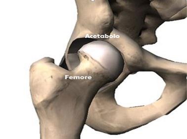 Anatomia anca sana