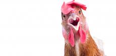 Mal di schiena e muscoli spenti: è nato prima l'uovo o la gallina?